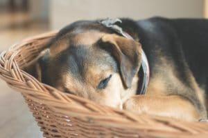 Hundekorb Ratgeber - Hundekorb oder Hundebett