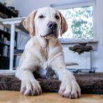 Hund auf Hundedecke - Hundekorb oder Hundebett