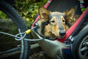 Hund im Fahrradanhänger - Fahrrad-Hundekorb