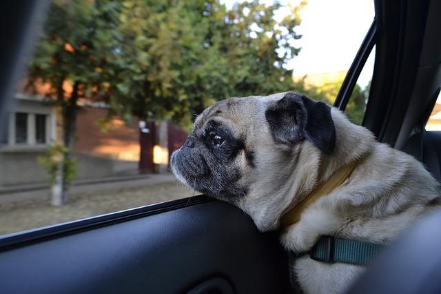 Hundekorb Vergleich - Hund im Auto