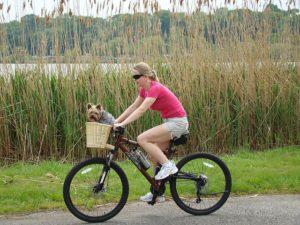 Hund im Fahrrad Hundekorb