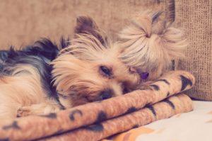 Hundekorb Vergleich - Hundekorb oder Hundebett