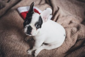 Umzug mit Hund - Hund sitzt auf Hundedecke