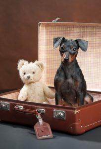 Hund sitzt im Koffer