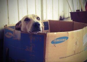 Umzug mit Hund - Hund liegt in Karton